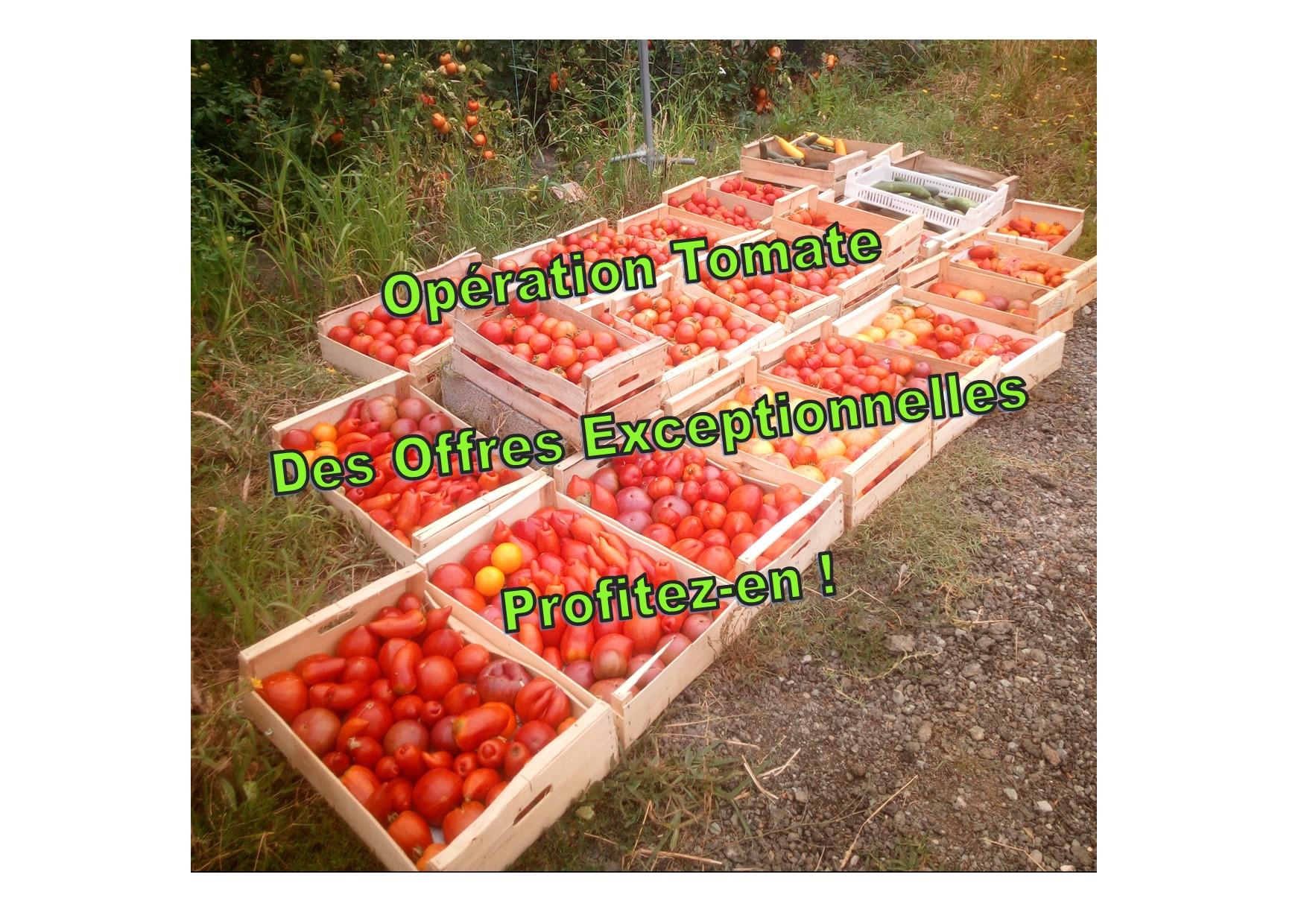 opération tomate